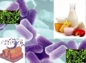 Lactobacilli. Foto: hubpages.com